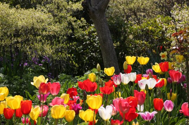 庭の花10年01.jpg